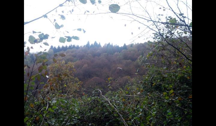Vista bosco