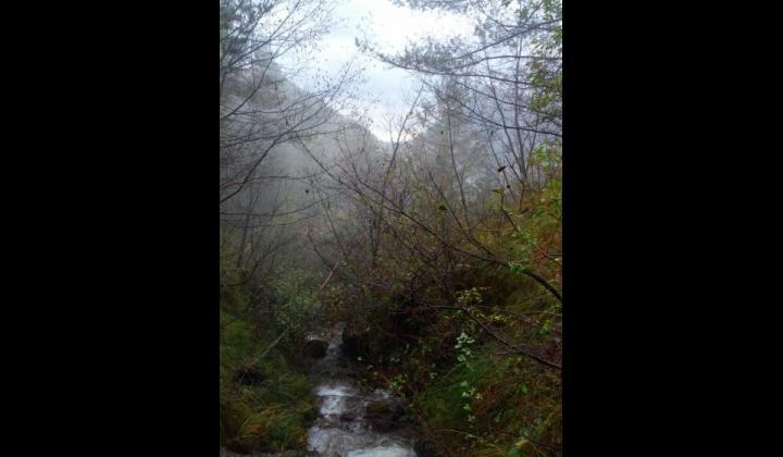 Vista ruscello tra i boschi