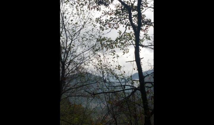 Pineta vista verso l'alta Valle Trompia